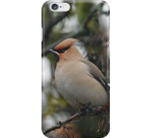 Waxwing iPhone Case/Skin