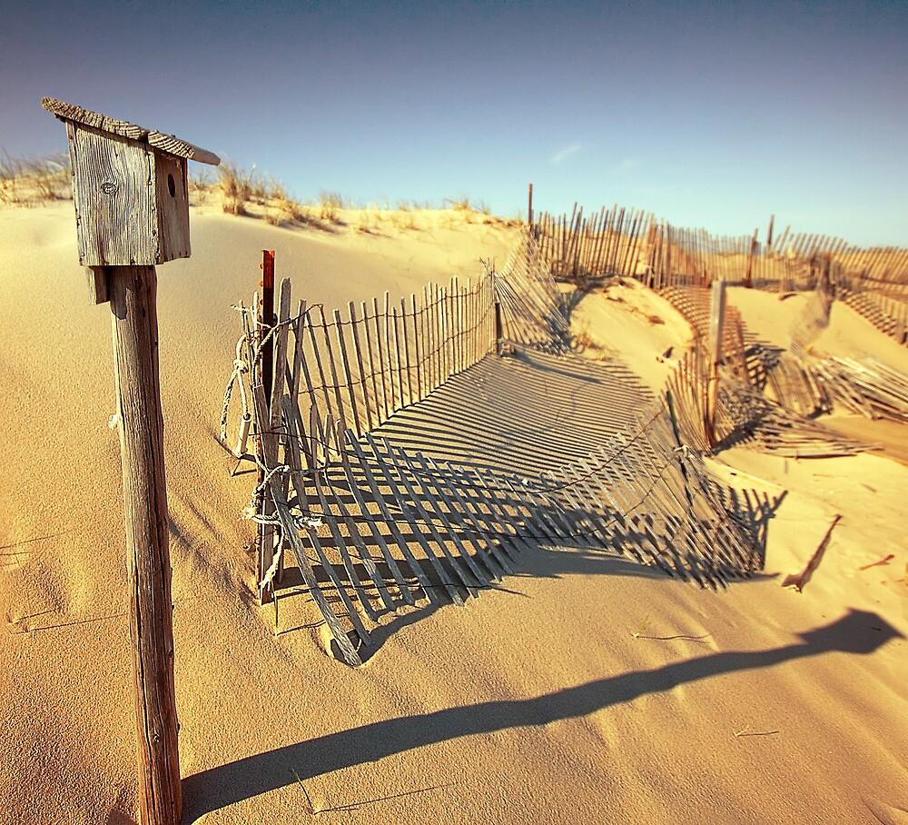 Cape Cod Dune Fence by capecodart