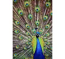 Pretty as a Peacock Photographic Print