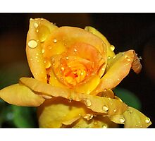 In the gentle rain Photographic Print