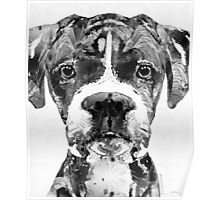 Black And White Boxer Dog Art By Sharon Cummings  Poster