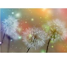 Dandelion filed Photographic Print