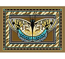 Tiger Stripe Butterfly Photographic Print