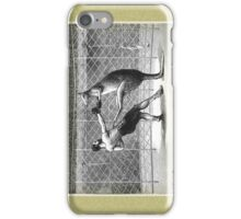 Boxing Kangaroo iPhone Case/Skin