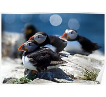 The Puffin posse  Poster