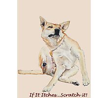 Cute funny dog scratching art with humorous slogan Photographic Print