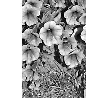 B&W Flower Photography #2 Photographic Print
