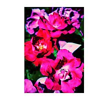 Planting Fields Arboretum Photographic Print