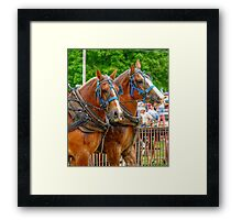 A Horse with a Moustache? Framed Print
