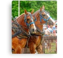 A Horse with a Moustache? Metal Print