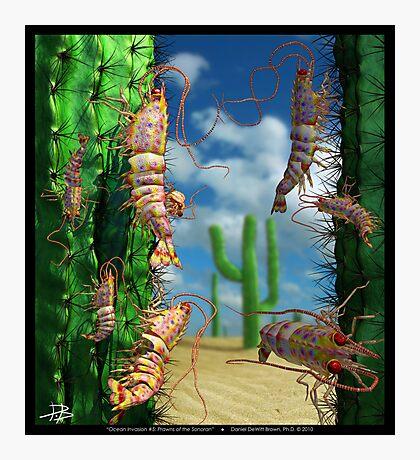 Ocean Invasion #5: Prawns of the Sonoran Photographic Print