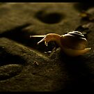 snail on  Old 1853 Gravestone 3.  Washburn Illinois by tomcelroy