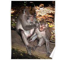 Bali Monkey Business Poster