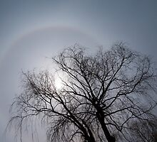 Sun Halo, Trees And Silver Gray Winter Sky by Georgia Mizuleva