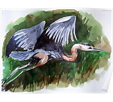 Blue Heron over the Grasslands Poster
