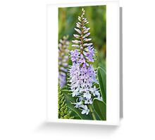 Violet Hebe Greeting Card