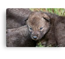 Timber Wolf Pup Canvas Print