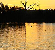 Sunsets On Wonga Wetlands. by Petehamilton
