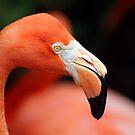flamingo by DBArt