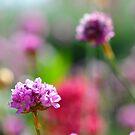 Bouquet Bokeh by duncandragon