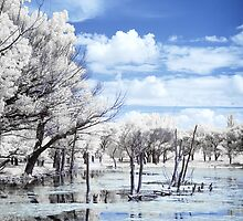 Eco Park IR again by Pete Latham