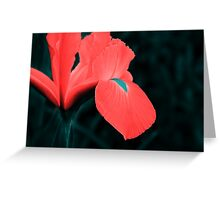 Iris in pseudo-infrared Greeting Card