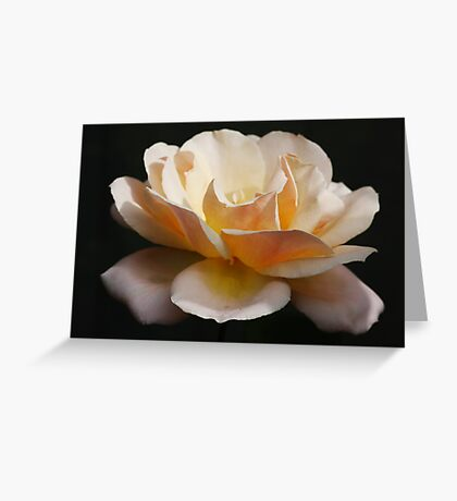 Peace Rose Greeting Card