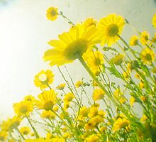 Sunny Afternoon by Cassia