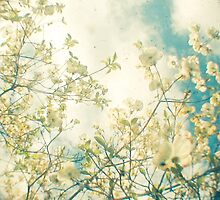 Clusters in the Sky by Cassia