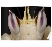 orchid mantis eyes Poster