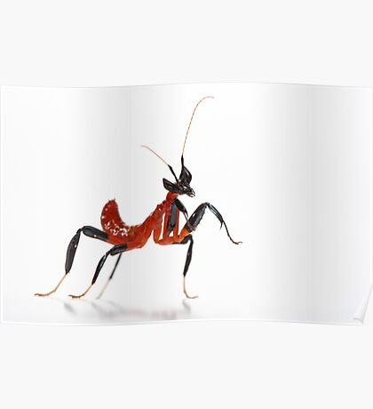 newly born hatchling orchid mantis 1st instar Poster