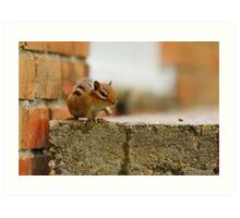Albert the Chipmunk back on the stage again. Art Print