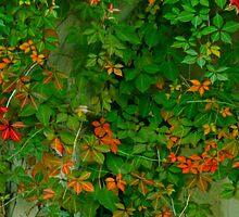 Green and orange ivy by Deb Gibbons