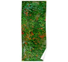Green and orange ivy Poster