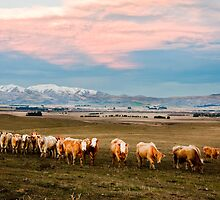 Wending our way home at the end of the day. Otago, South Island, New Zealand by Fineli