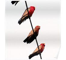 Birds on string 2. Poster