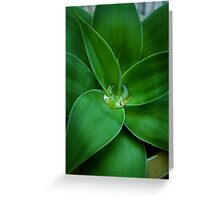 Agave tears Greeting Card