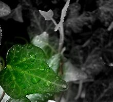 Hanging Ivy -Selective Coloring ^ by ctheworld