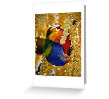 Hang'n out for Lunch Greeting Card