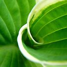 Green Swirl  by Lena Weiss