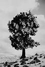 Un arbre près d'Arris by Rhoufi