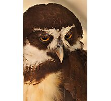 Hooter the Owl Photographic Print