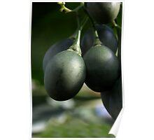 Tomate de Árbol Poster