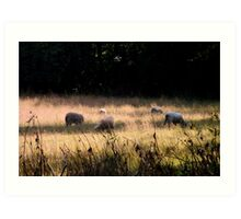 Sheep in the Meadow Art Print