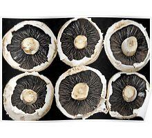Rows of Mushroom Caps Poster