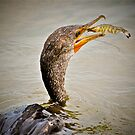 Cormorant Fishing for Shrimp by imagetj