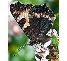 Battered Canvas Wings Photographic Print