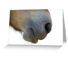 Gift Horse Greeting Card