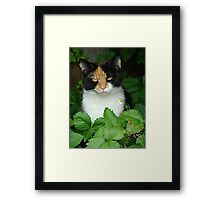 Charlie in the strawberry patch Framed Print
