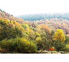 Autumnal colored woods Photographic Print